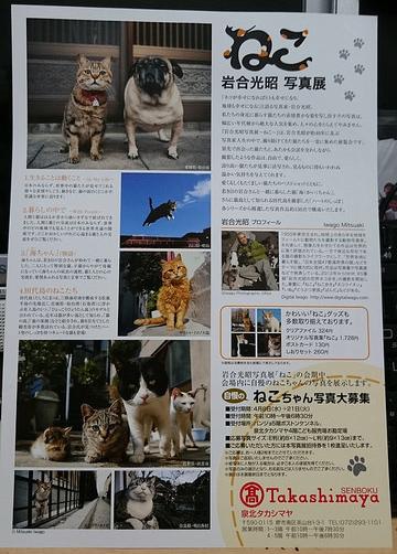 20150503_neko_04
