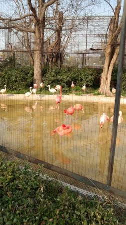 天王寺動物園(4)