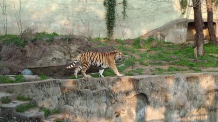 天王寺動物園(8)