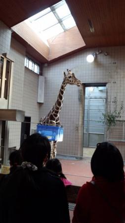 天王寺動物園(9)