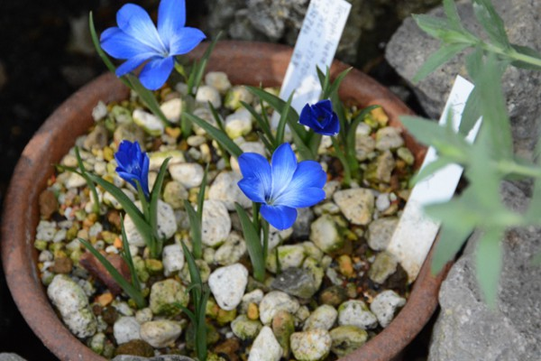 咲くやこの花館 06