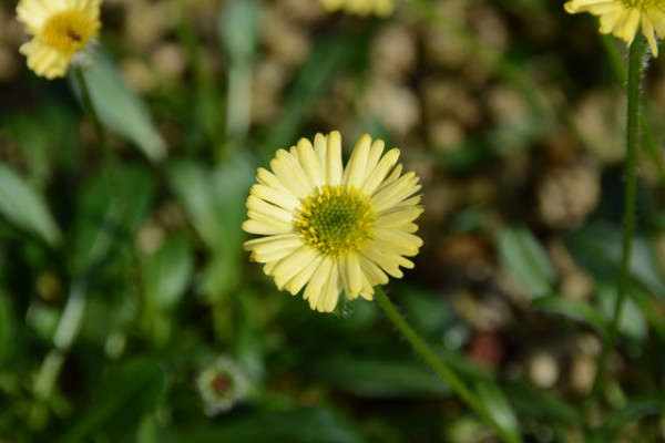 咲くやこの花館 07