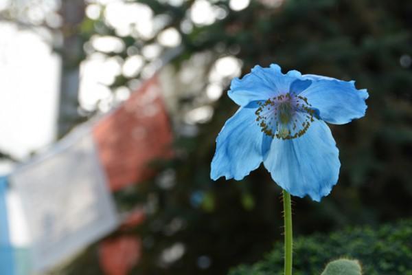 咲くやこの花館 08