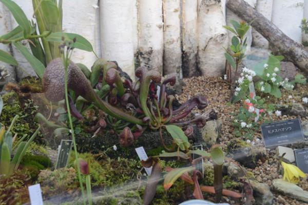 咲くやこの花館 09
