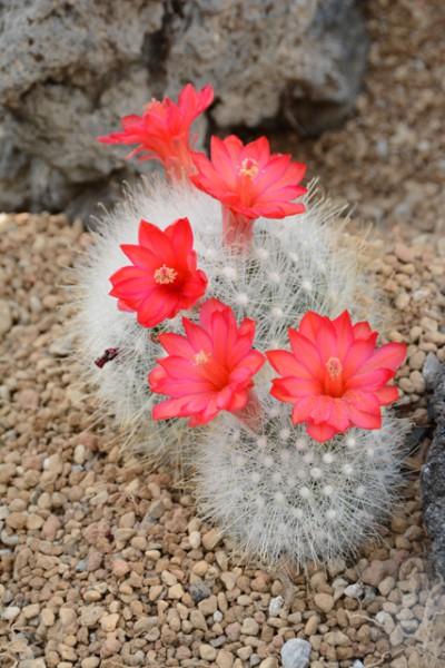 咲くやこの花館 10