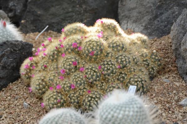 咲くやこの花館 12