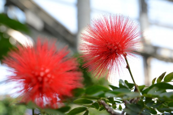 咲くやこの花館 16