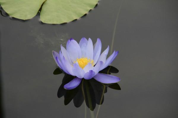 咲くやこの花館 18